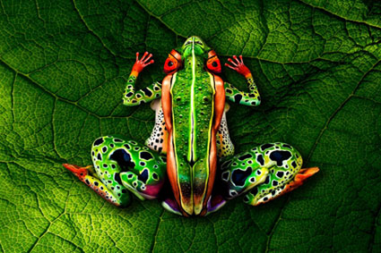 stoetter body painting frog