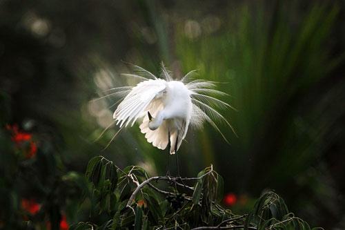 egrets india 2